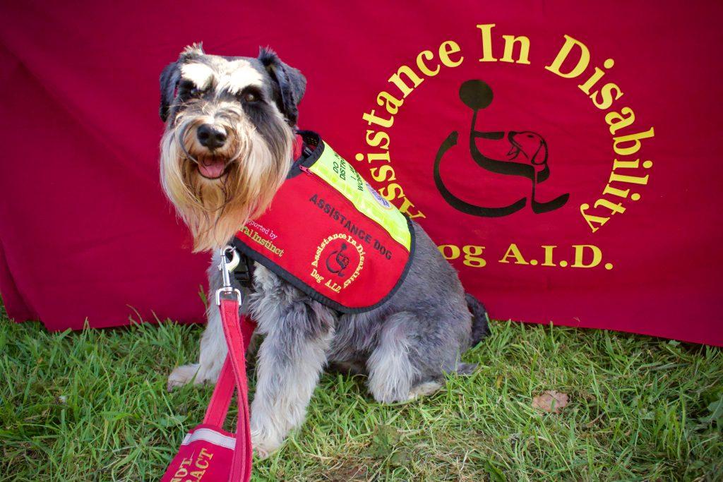 Dog A.I.D